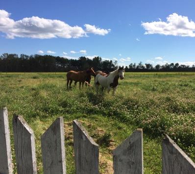 june horses