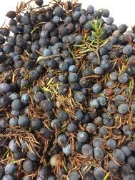 juniper-berries