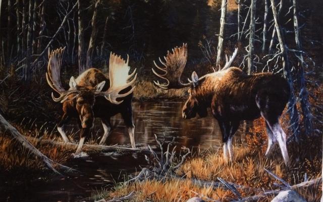 moose before