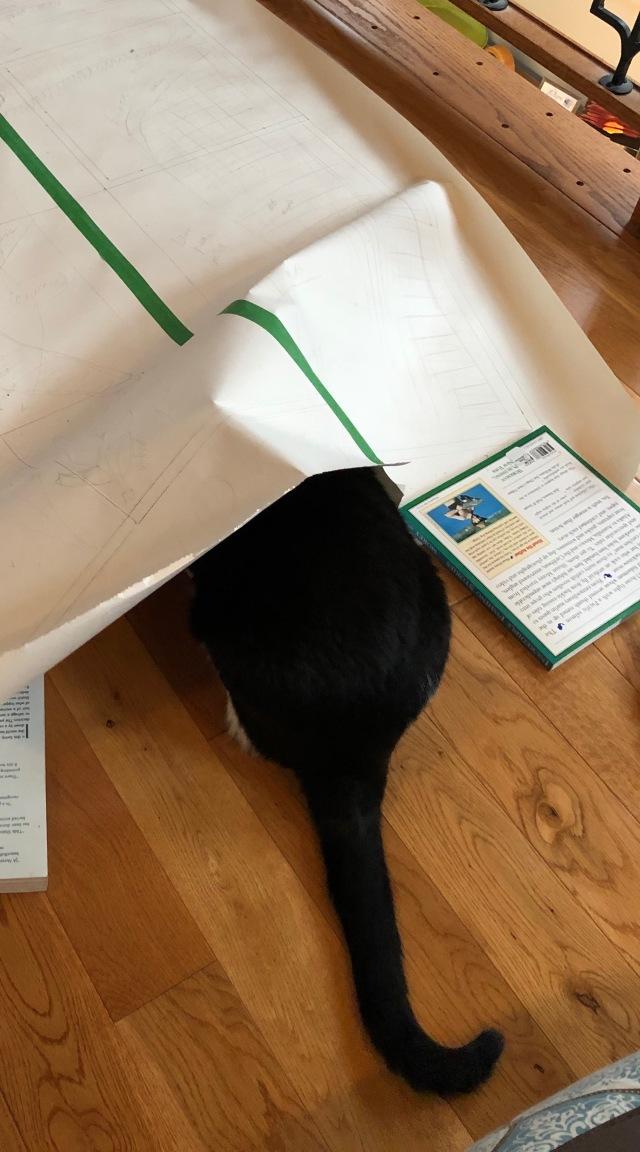 201 cat